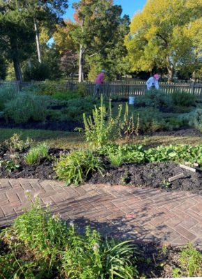 Northern Neck Master Gardeners working Washington Birthplace garden