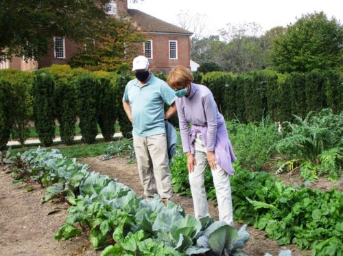 Master Gardeners working in Stratford Hall vegetable garden