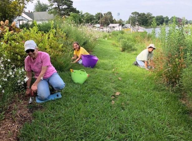 Northern Neck Master Gardeners (l to r) Barb Kauneckas, Carol Martin, and Deborah Marl working at the Shoreline Demonstration Garden.