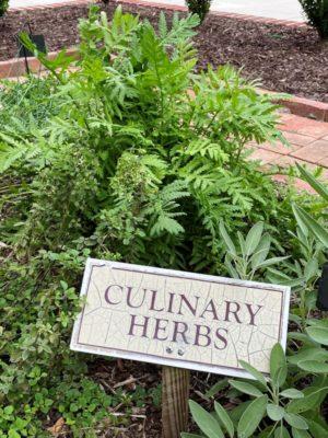 Culinary herbs at Historic Christ Church
